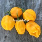 Habanero Marobie Yellow